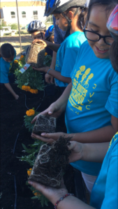 Two young people in the foreground inspect the roots and soil of marigolds